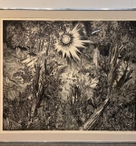 337. Albert Decaris. Signed & No. Engraving, Forest |  $210