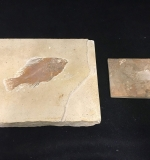 50. Two Wyoming Fish Fossils |  $36