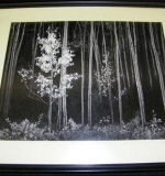 Ansel Adams photograph, Aspens, New Mexico, dated 1958, pencil signed. $13,800