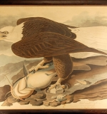 Engraving with Etching after John J. Audubon (Eagle). $9,680