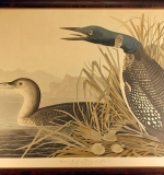 Engraving with Etching after John J. Audubon (Loon). $6,490
