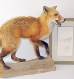 Andrew N. Wyeth Pencil Sketch of Fox w/Study Model. $4,356