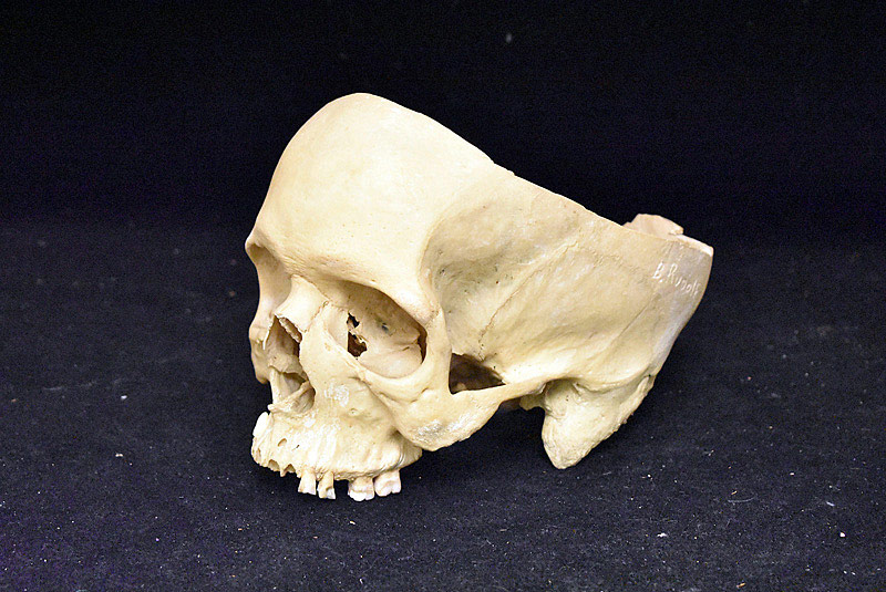 567. Human Medical Display Skull. | $369