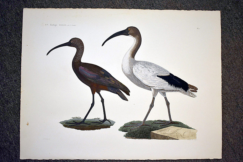 683. After Jacques Barraband Zoologie Portfolio of Bird Engravings. | $885