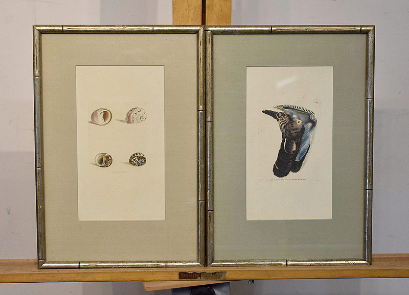 685. Two Shell Engravings, circa 1800. Plate #439 and #670. | $36.90