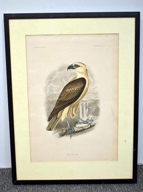 365. T.R. Peale. Hand-Colored Engraving, Hawk   $61.50